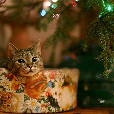 Новорічні та Рiздвянi пісні (Збірка №2)